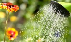 sodininkystes terapija