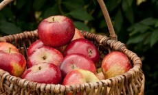 obuoliu