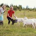 Įkvepianti istorija: vilnietis darbą biure iškeitė į… kaimą ir 13 ožkų