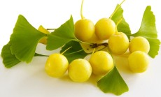 Ginkmedžio vaisiai