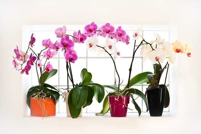 8 patarimai kad orchid jos yd t for Orchidea fioritura