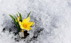 """""""pavasaris"""""""