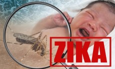 """""""zika"""""""