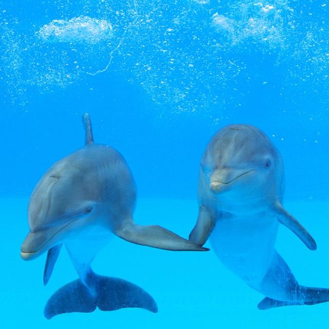 """""""delfinai"""""""