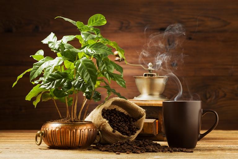 kavamedis