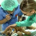 Priglaudė nebereikalingą šunelį, dabar gelbėja jam gyvybę