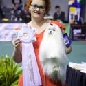 Tarptautinėse šunų parodose – Lietuvos vardas tarp geriausiųjų