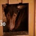 Sadizmas Lietuvoje – pakorė šunį savo kieme ant obels