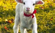 Sapnuojamas gyvūnas-ateities pranašas (4)