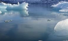 ledynai