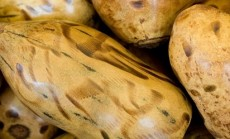 baobabo vaisiai