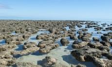 stromatolitai