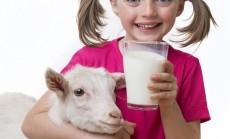 ozkos pienas