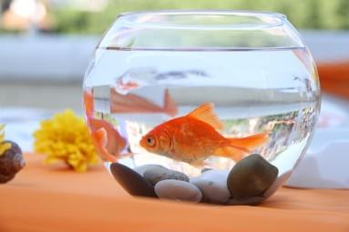žuvys, sergančios hipertenzija rytietiškas masažas sergant hipertenzija