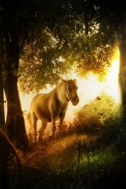 arklys