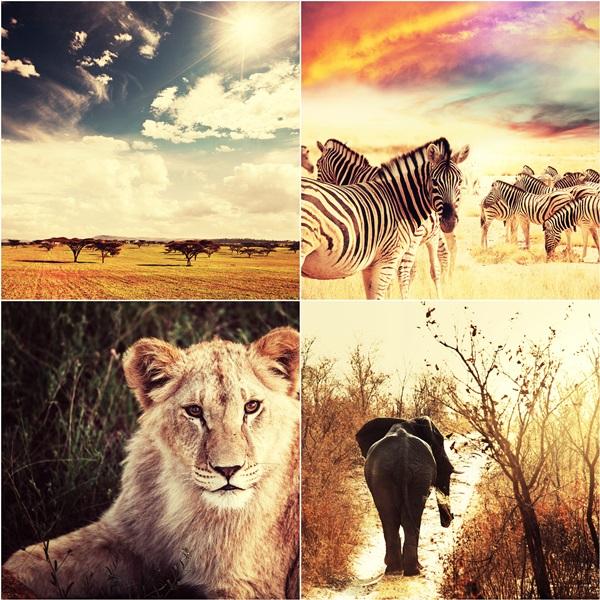 """Afrikos safaris"""