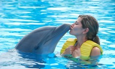 """delfinas ir mergina"""
