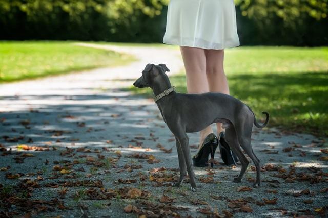 """""""pasivaikščiojimas su šunimi"""""""