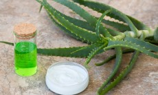 vaistinis alavijas