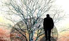 tree-97986_640