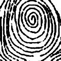 spiralinis
