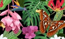 tropikai